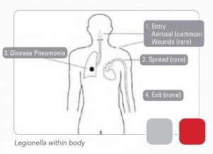 Legionella Within The Body