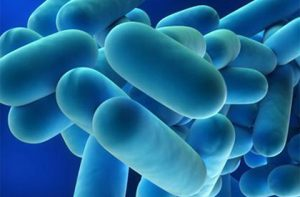 OMNI Legionella